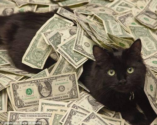 黑猫与钱.jpg