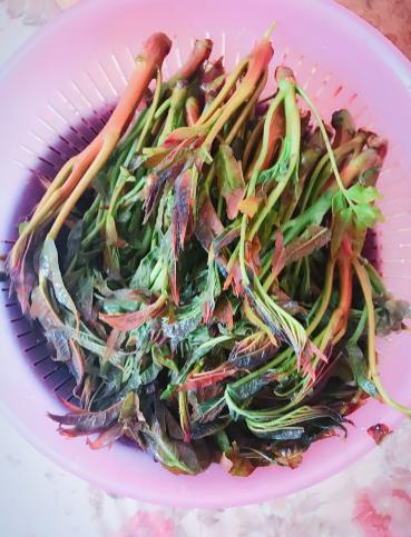 炸香椿鱼1.png